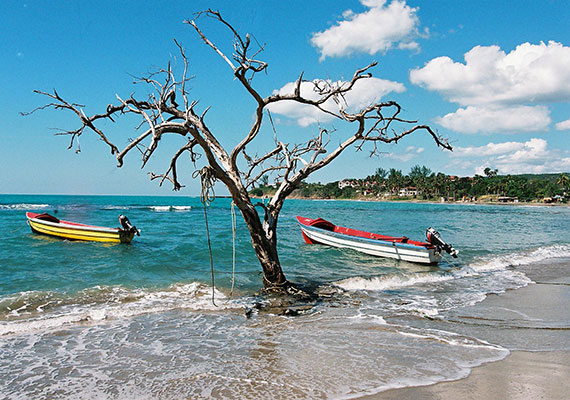 Tree and two boats on the beach